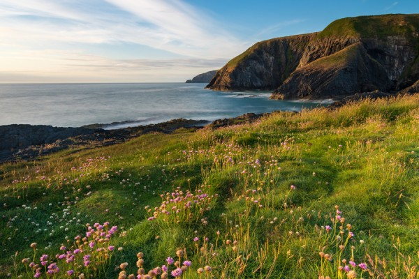 ALS Wildflower Seed for Coastal Meadows