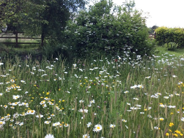ALS Wildflower Seed For Country Meadows