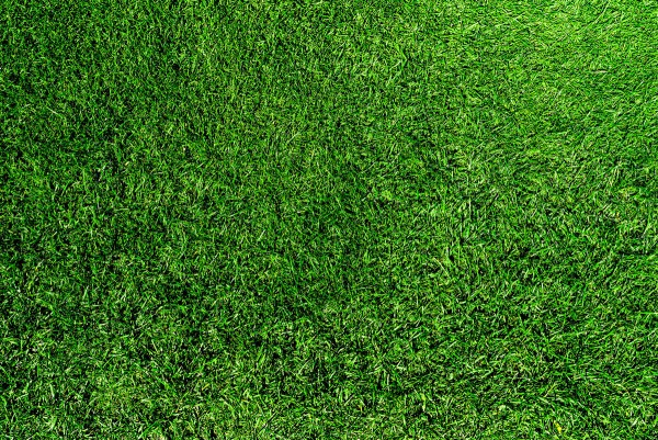 Dark Green Turf Mix
