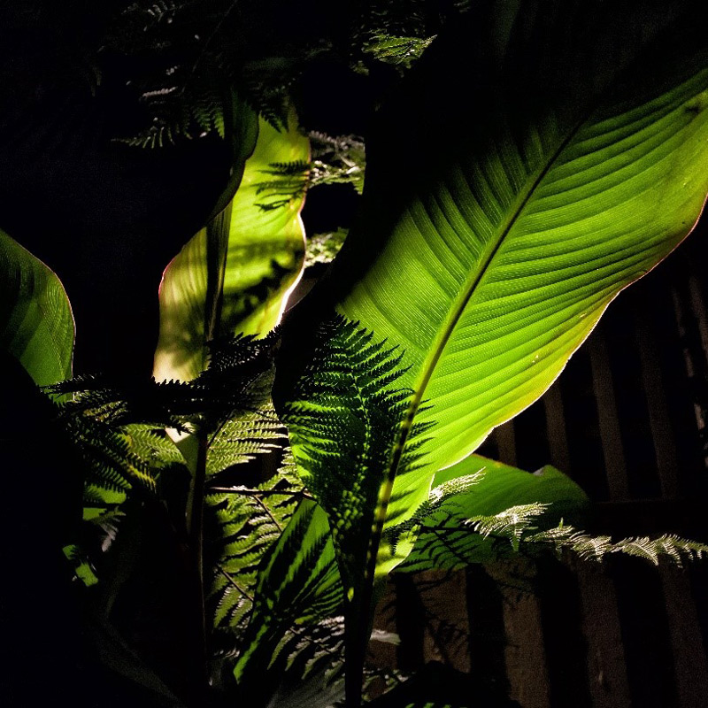 tropical foliage lit from beneath. A fine example of garden lighting