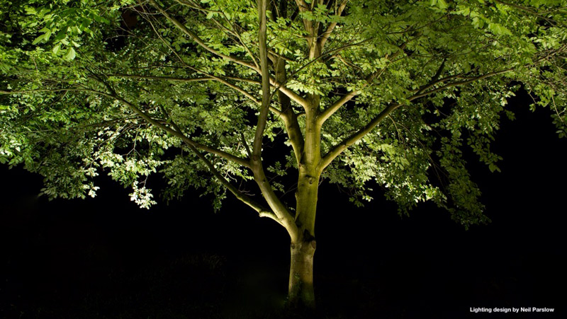 garden lighting effects with mature tree