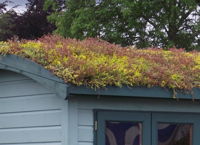 sedum roof on curved roof of a shepherds hut